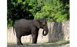 Depressed elephant at Warsaw Zoo to receive experimental cannabis oil treatment